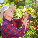 Lynn Pettigrew prepping a special cymbidium for the Santa Barbara International Orchid Show. Photo by Chuck Place.
