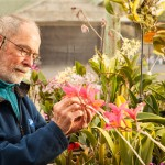 Don Brown grows a variety of orchids using a reverse osmosis system to provide pure water. Photo by Chuck Place.