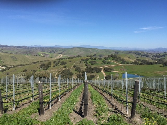 Spear Winery's Vineyard view, photo by Leslie Dinaberg.
