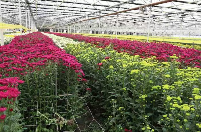 Spring blooms at the Carpinteria Greenhouse and Nursery Tour, courtesy photo.