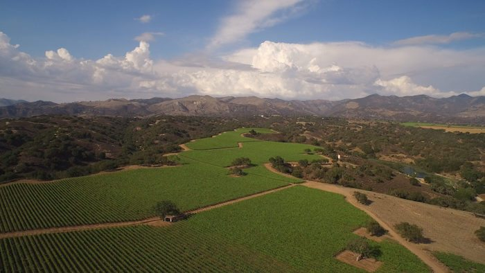 A drone view of Zaca Mesa Vineyard, courtesy Zaca Mesa.
